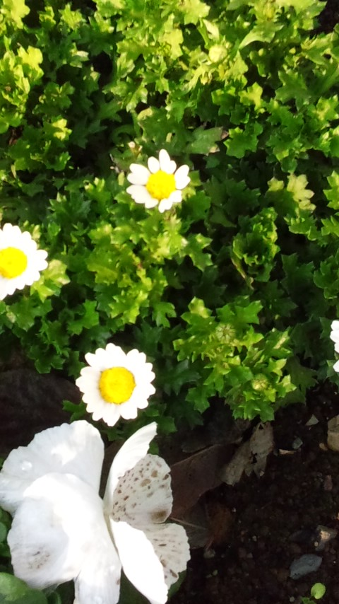 花いっぱい! ※お知らせあり
