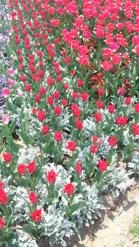 花ギャラリー
