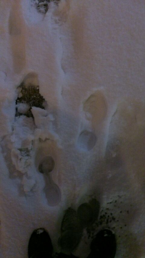 大雪だー!!!
