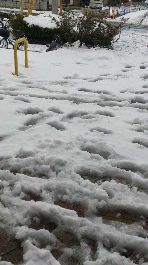今週も大雪…(-_-)